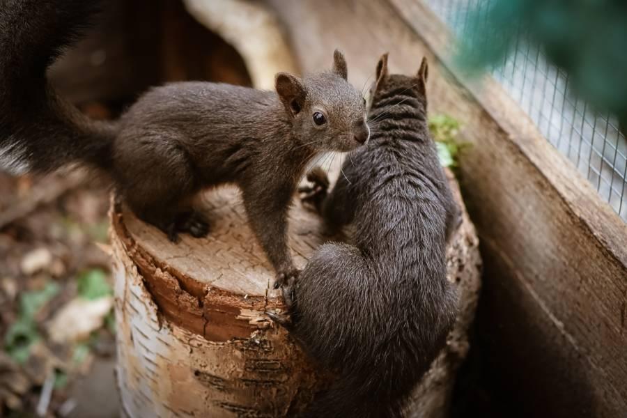 eichhörnchen vertreiben